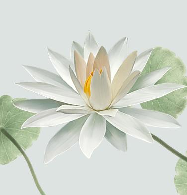 home_yoga_lotus2